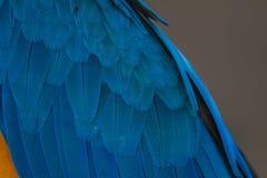 Перо ары, попугая птицы Стоковое фото RF
