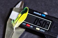 Перо волнистого попугайчика и крумциркуля Стоковое Фото