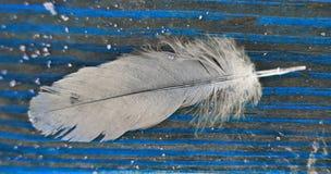 Перо в сини Стоковые Фото