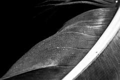Перо в черно-белом стоковые изображения