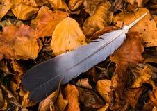 Перо и листья Стоковые Фотографии RF