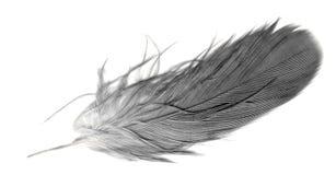 перо над белизной quill Стоковая Фотография