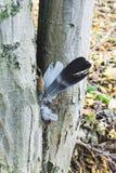 Перо на дереве Стоковая Фотография RF