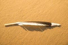 Перо на пляже песка стоковые изображения rf