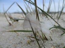 Перо на пляже стоковое фото rf