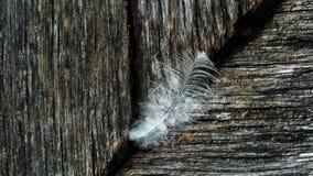 перо на древесине в деталях Стоковое Изображение RF