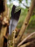 Перо на древесине Стоковая Фотография RF