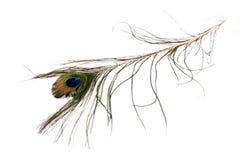 Перо павлина Стоковое фото RF