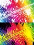 Перо покрашенное радугой Стоковое Изображение RF