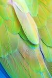 Перо попыгая Стоковое Фото