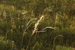 перо порхая в ветре Стоковое Изображение