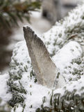 Перо птицы вставляя от снежной ветви сосны стоковое изображение