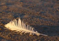 Перо птицы в песке на seashore Стоковое Изображение RF
