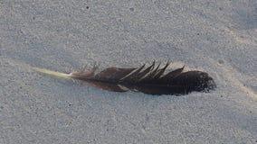 Перо птицы в песке Стоковое Изображение RF
