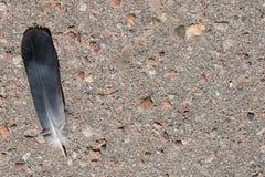 Перо птицы на асфальте Стоковая Фотография RF