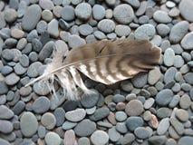 Перо птицы на камнях Стоковые Изображения RF