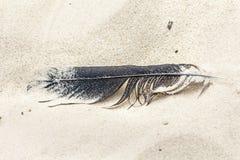 Перо птицы на песке Стоковая Фотография