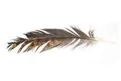 Перо птицы Стоковые Фотографии RF