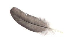 Перо птицы Стоковое Фото