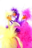 перо птиц Стоковая Фотография