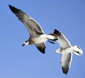 перо птиц Стоковое Изображение