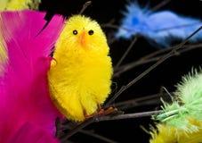 перо цыпленка Стоковая Фотография