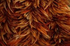 Перо цыпленка Стоковые Фотографии RF