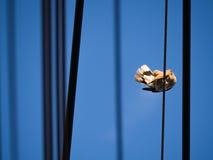 Перо шлейфа голубя Стоковое фото RF