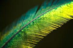 Перо Quetzal Стоковые Изображения RF