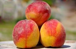 3 персика стоковые фотографии rf