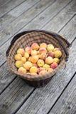 Персики в корзине Стоковые Фотографии RF
