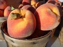 Персики рынка фермы Стоковое Изображение RF