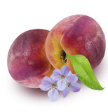Персик изолированный с цветком персика на белизне Стоковые Фотографии RF