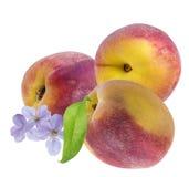 Персик изолированный с цветком персика на белизне Стоковая Фотография