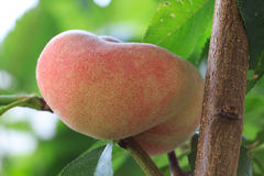 Персик донута на дереве Стоковые Изображения RF