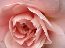 Персик пинка роз абстрактной ткани розовый Стоковая Фотография