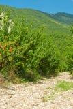 персик сада предгорья Стоковые Изображения RF