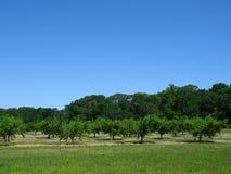 персик сада Стоковое Изображение