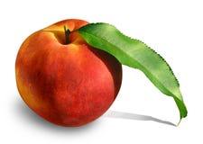 персик 2 листьев Стоковое Фото