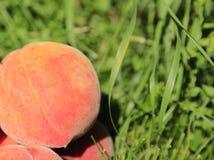 Персик Стоковые Изображения RF
