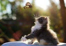 персидский кот Стоковые Фото