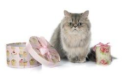 персидский кот Стоковое Изображение RF