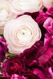 Перский лютик Образуйте красочное и бледное - предпосылка розовых цветков лютика светлая Стеклянная ваза на розовое винтажное дер Стоковые Изображения RF
