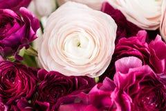Перский лютик Образуйте красочное и бледное - предпосылка розовых цветков лютика светлая Стеклянная ваза на розовое винтажное дер Стоковые Фотографии RF