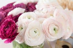 Перский лютик Образуйте красочное и бледное - предпосылка розовых цветков лютика светлая Стеклянная ваза на розовое винтажное дер Стоковое Фото