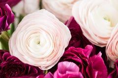 Перский лютик Образуйте красочное и бледное - предпосылка розовых цветков лютика светлая Стеклянная ваза на розовое винтажное дер Стоковая Фотография