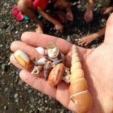 Персона держа seashells Стоковые Изображения RF