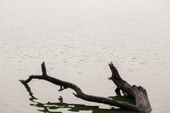 Персона которая плавает Стоковые Фото