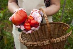 Персона с продуктом сада Стоковая Фотография