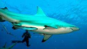 Перспектива акулы бортовая Стоковая Фотография RF